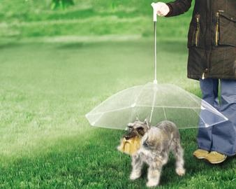 dog-umbrella-pictures-2
